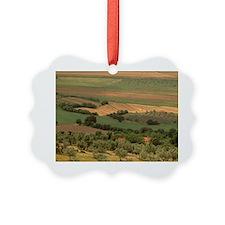 Massa Marittina. Olive groves ben Ornament