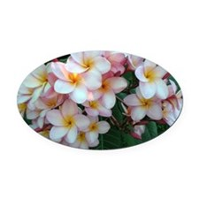 Pretty Pink Plumeria Flowers Oval Car Magnet