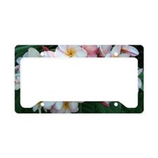 Pretty Pink Plumeria Flowers License Plate Holder
