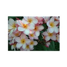 Pretty Pink Plumeria Flowers Rectangle Magnet