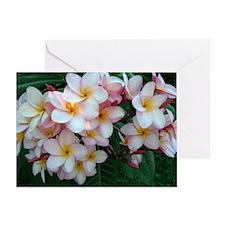 Pretty Pink Plumeria Flowers Greeting Card
