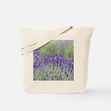 1-IMG_2325 Tote Bag