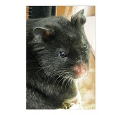 Black Hamster Postcards (Package of 8)