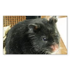 Black Hamster Decal