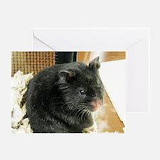 Black Hamster Greeting Card