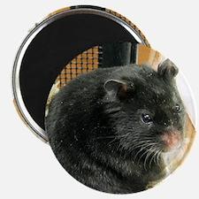 Black Hamster Magnet