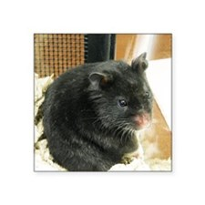 "Black Hamster Square Sticker 3"" x 3"""