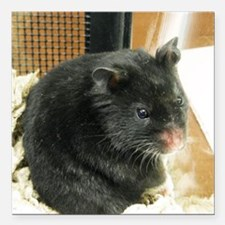 "Black Hamster Square Car Magnet 3"" x 3"""