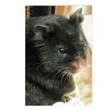 Black Hamster Postcards (Package of 8)