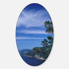 Weathered pine clings to cliffs ove Decal
