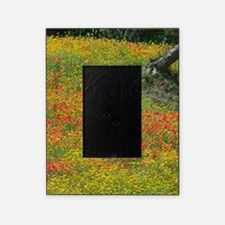 Italy, Sicily, Enna, Field of Poppie Picture Frame