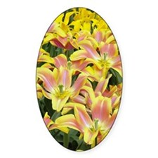 Pattern of tulip flowers, Keukenhof Decal