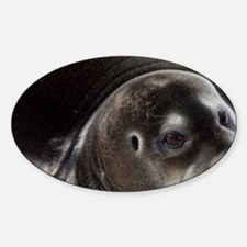 Bearded Seal (Erignathus barbatus)  Sticker (Oval)