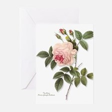 Tea Rose NoteCards (Pk of 10) Greeting Cards
