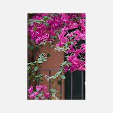 Italy, Sicily, Cefalu, Flowered C Rectangle Magnet