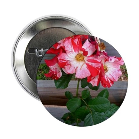 "Fourth of July climbing rose 2.25"" Button"