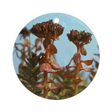 Arakamchechen Island. Tundra flower Round Ornament