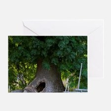 The hollow tree where the children c Greeting Card