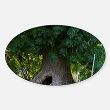 The hollow tree where the children  Sticker (Oval)