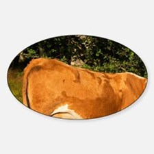 Cow Brown and white Profile Smaland Sticker (Oval)