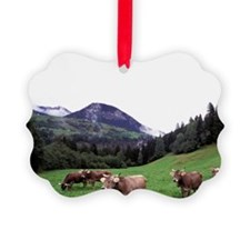 Umbrail Pass. Swiss brown cowsn,  Ornament