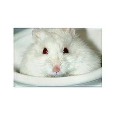 White-Albino Hamste... Rectangle Magnet