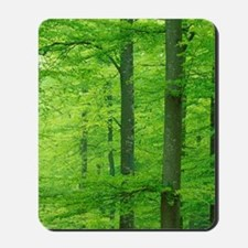 Sweden. Beech (Fagus sylvatica) Forest. Mousepad