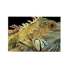 iguana-patch Rectangle Magnet