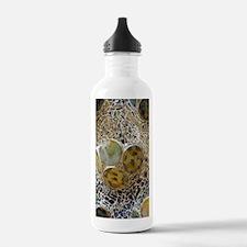 Casa Batllo, architect Water Bottle