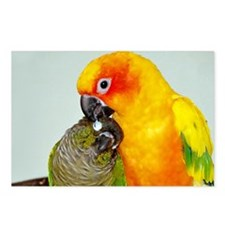 bird-laptop Postcards (Package of 8)