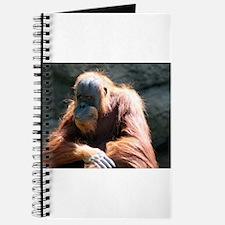 Mr. Orange Journal