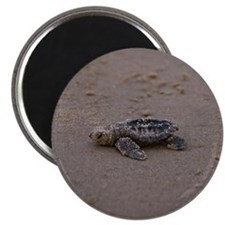 solitary turtle Magnet