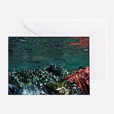 Chinook Salmon (Oncorhynchus tshawyt Greeting Card