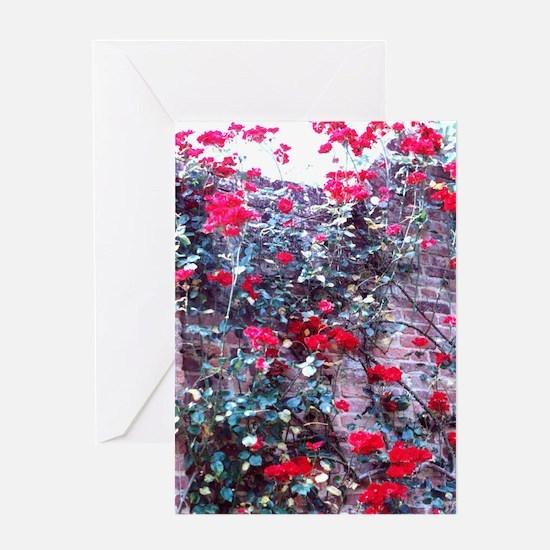red climbing rose Greeting Card