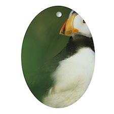 Horned Puffin, (Fratercula cornicula Oval Ornament