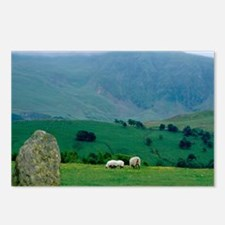 Sheep grazing in distance Postcards (Package of 8)