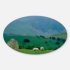 Sheep grazing in distanceingdom, La Decal