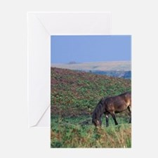 Europe, England, Devon, Exmoor. Exmo Greeting Card