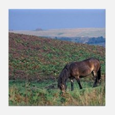 Europe, England, Devon, Exmoor. Exmoo Tile Coaster