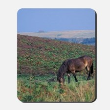 Europe, England, Devon, Exmoor. Exmoor p Mousepad