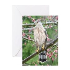 Coop10x8A Greeting Card