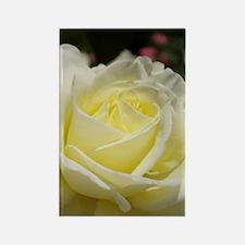 Ivory rose Rectangle Magnet