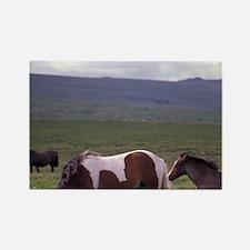 Europe, England, Devon, Dartmoor. Rectangle Magnet