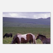 Europe, England, Devon, D Postcards (Package of 8)