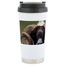 Scotland, Isle of Skye. Sheep p Travel Mug