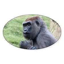 Gorilla2 Plate Decal