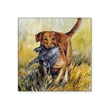 "Chessie w Ph Master for Caf Square Sticker 3"" x 3"""
