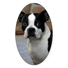 Boston Terrier 2 Decal