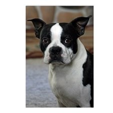 Boston Terrier 2 Postcards (Package of 8)