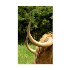 Highland cow. Decal